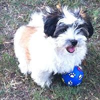 Success Puppy Training testimonial