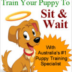 Train your puppy to sit and wait