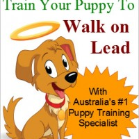 Train your puppy to walk on a lead