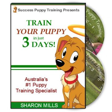 Success Puppy Training DVD Set