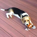 jimboomba puppy training reviews