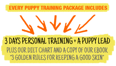 In Person Puppy Training Packages