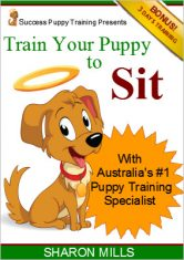 Sit puppy training video