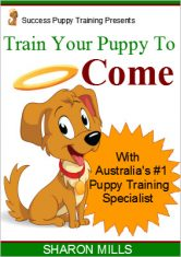 How to train your puppy to come