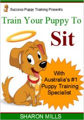 How to train your puppy to sit