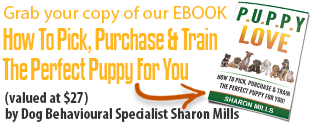 Get Your Free Puppy Training Ebook