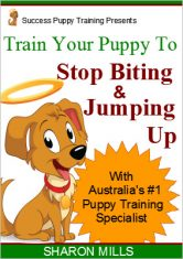 Train Puppy to stop biting and jumping