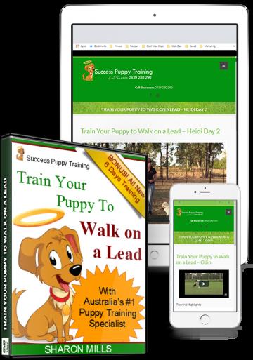 Walk on lead puppy training
