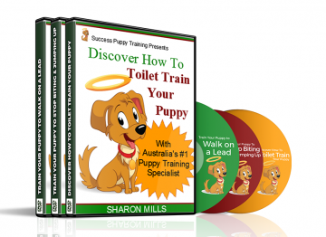 toilet training puppy