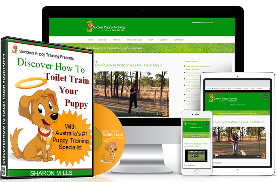 toilet training puppy course